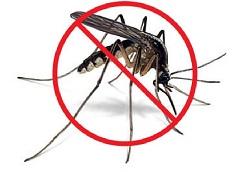 lovushka-dlya-komarov-svoimi-rukami